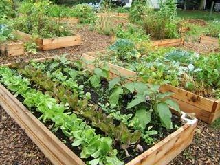community garden barron county