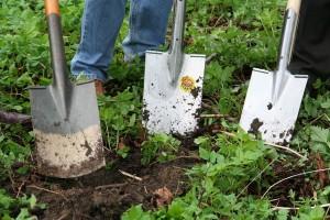 gardening-331986_640